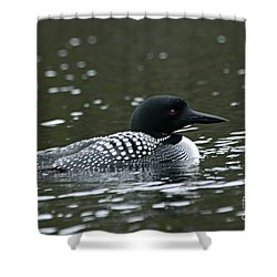 Common Loon 3 Shower Curtain by Larry Ricker
