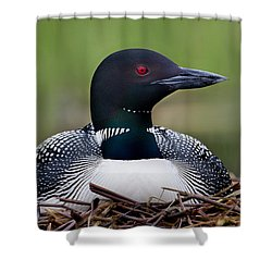 Common Loon On Nest British Columbia Shower Curtain by Connor Stefanison