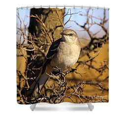 Common Mockingbird Shower Curtain by Robert Frederick