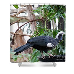 Common Piping Guan Shower Curtain by Lingfai Leung