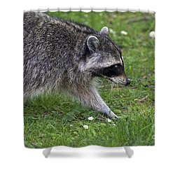 Common Raccoon Shower Curtain by Sharon Talson