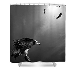 Conceptual - Vultures Awaiting Shower Curtain by Johan Swanepoel