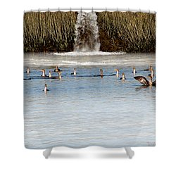 Cormorant Convention Shower Curtain by EricaMaxine  Price