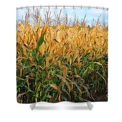 Corn Harvest Shower Curtain by Terri Gostola