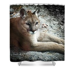 Cougar Country Shower Curtain by Karen Wiles