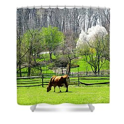 Cow Grazing In Pasture In Spring Shower Curtain by Susan Savad