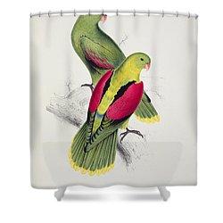 Crimson Winged Parakeet Shower Curtain by Edward Lear