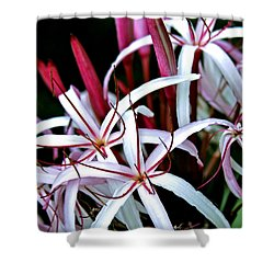 Crinum Asiaticum Spider Lily Hawaii Shower Curtain by Karon Melillo DeVega