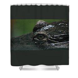 Croc's Eye-1 Shower Curtain by Gary Gingrich Galleries