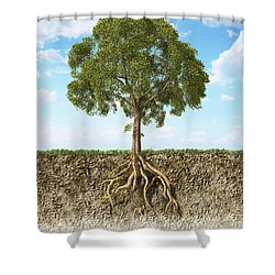 Cross Section Of Soil Showing A Tree Shower Curtain by Leonello Calvetti