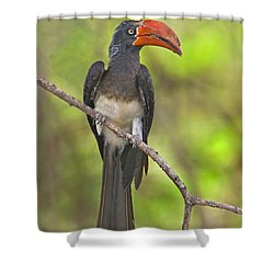 Crowned Hornbill Perching On A Branch Shower Curtain by Panoramic Images