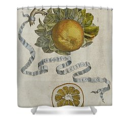 Curled Leaf Orange Shower Curtain by Cornelis Bloemaert