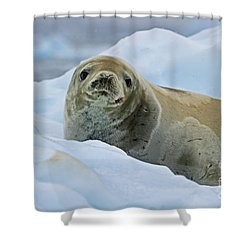 Cute And Cuddly... Shower Curtain by Nina Stavlund