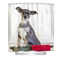 Cute Dog Washtub Shower Curtain by Edward Fielding