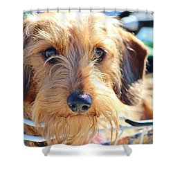 Cute Puppy Shower Curtain by Cynthia Guinn