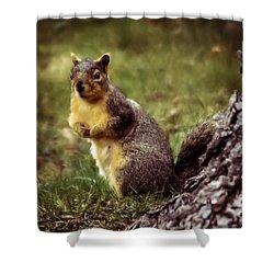 Cute Squirrel Shower Curtain by Robert Bales
