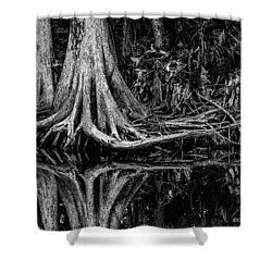 Cypress Roots - Bw Shower Curtain by Christopher Holmes