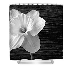 Daffodil Narcissus Flower Black And White Shower Curtain by Edward Fielding