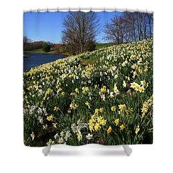 Daffodil Hill Shower Curtain by Karol Livote