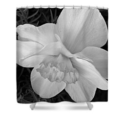 Daffodil Study Shower Curtain by Chris Berry