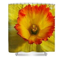Daffodil Sunset Shower Curtain by Shawna Rowe