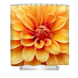 Dahlia Squared Shower Curtain by Anne Gilbert
