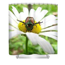 Daisies Bug Shower Curtain by Jennifer E Doll