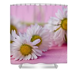 Daisies On Pink Shower Curtain by Jan Bickerton