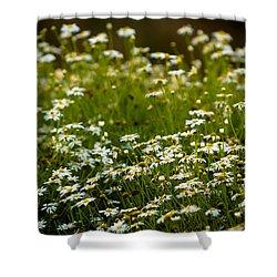 Daisy Sunrise Shower Curtain by Sebastian Musial