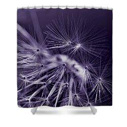 Dandelion Fly Away Dark Purple Shower Curtain by Jennie Marie Schell