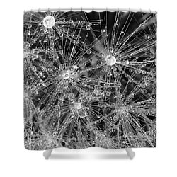 Dandelion Shower Curtain by Nicholas Burningham