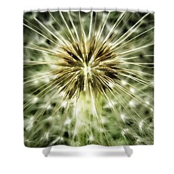 Dandelion Seeds Shower Curtain by Marianna Mills