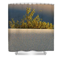 Dawn Mesquite  Shower Curtain by Joe Schofield