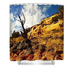 Dead Tree Against The Blue Sky Shower Curtain by Jeff Swan
