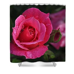 Deep Pink Beauty Shower Curtain by Rona Black