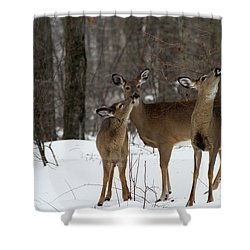 Deer Affection Shower Curtain by Karol Livote
