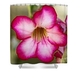 Delicate Desert Rose Shower Curtain by Sabrina L Ryan