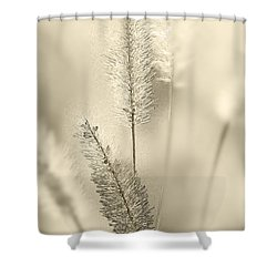 Delicate Sweetgrass Shower Curtain by Heiko Koehrer-Wagner