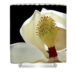 Demure Magnolia Shower Curtain by Sabrina L Ryan