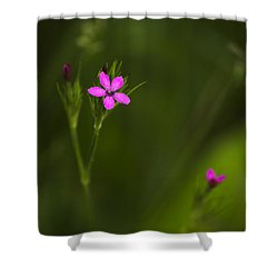 Deptford Pink Shower Curtain by Christina Rollo