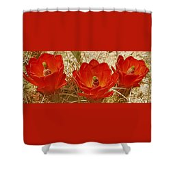 Desert Blooms Shower Curtain by Ben and Raisa Gertsberg