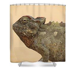 Desert Chameleon Shower Curtain by Ramona Johnston