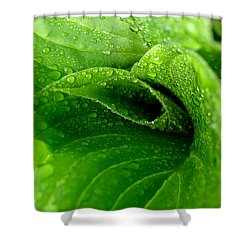 Dew Drops Shower Curtain by Lisa Phillips