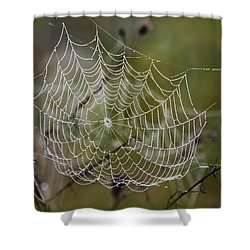 Dew Drops Spider Web Shower Curtain by Christina Rollo