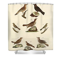Different Kinds Of Larks Shower Curtain by Splendid Art Prints