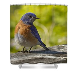 Distracted Shower Curtain by Jean Noren