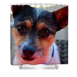 Dog 2   Shower Curtain by Naomi Burgess