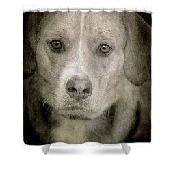 Dog Posing Shower Curtain by Loriental Photography