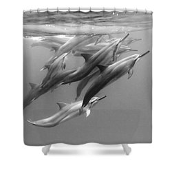 Dolphin Pod Shower Curtain by Sean Davey