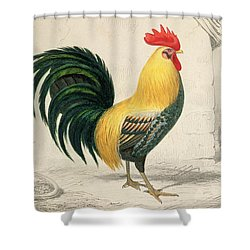 Domestic Cock Shower Curtain by Edouard Travies